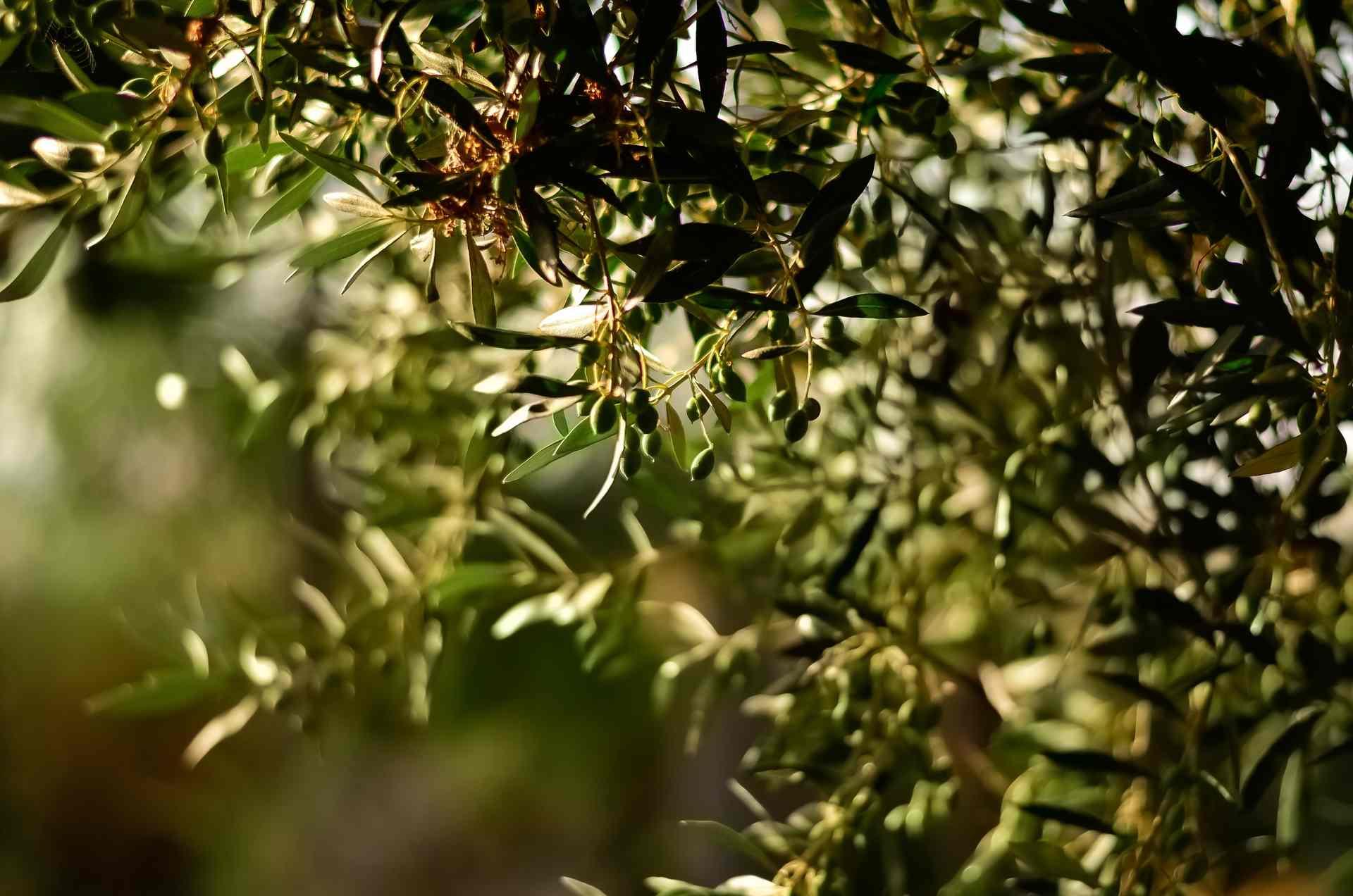 green-leaf-fruit-tree-selective-focal-photo-1047312-1 (1)