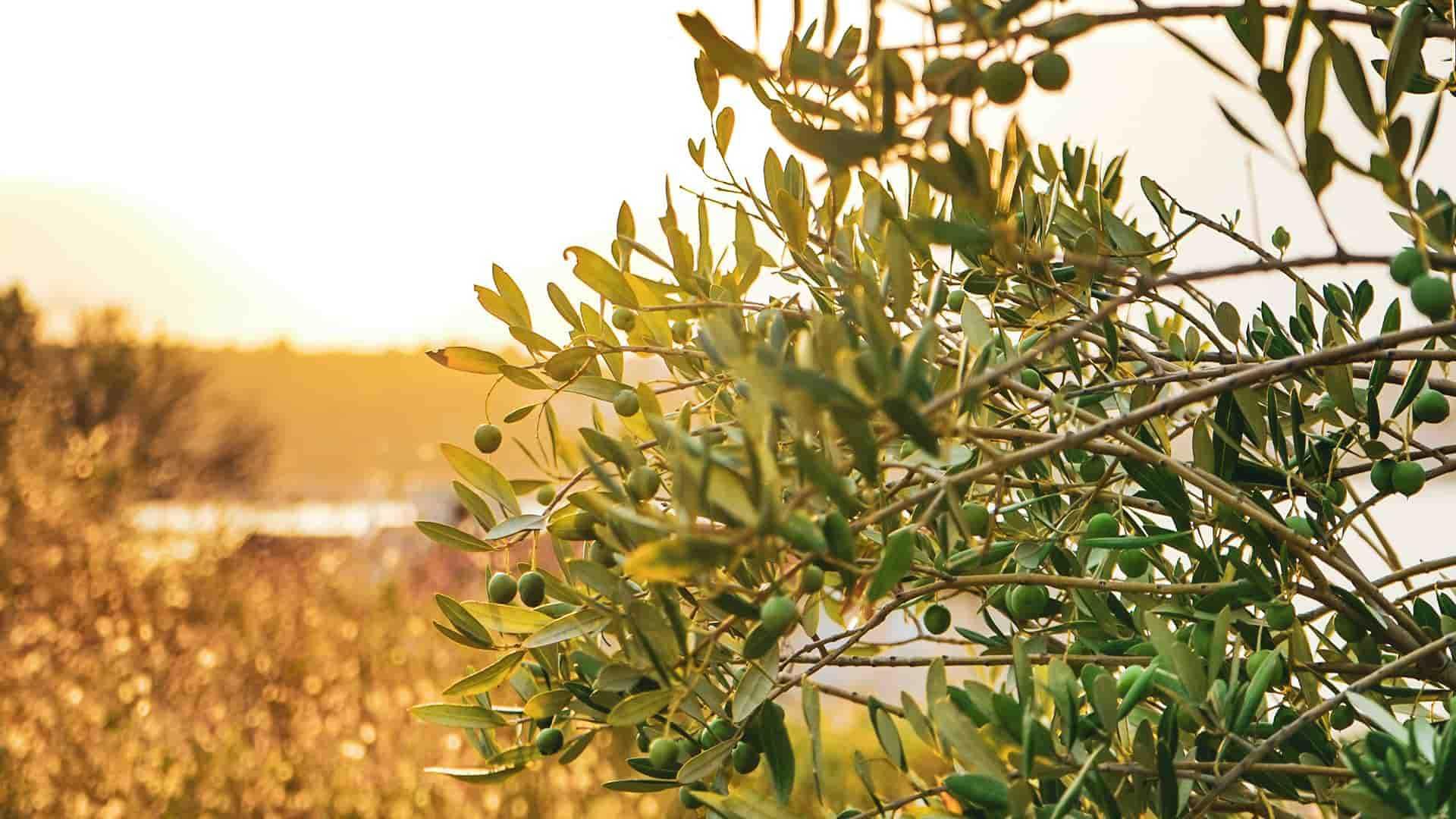 TeQflo Kundcase - ArcAromas inbound strategi för oliveCEPT